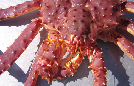 Red king crab photo gallery alaska department of fish and for Crab fishing game