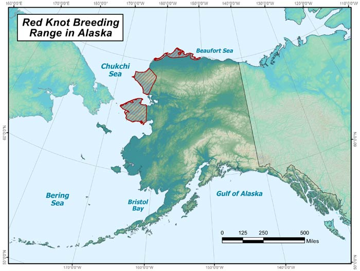 Range map of Red Knot in Alaska