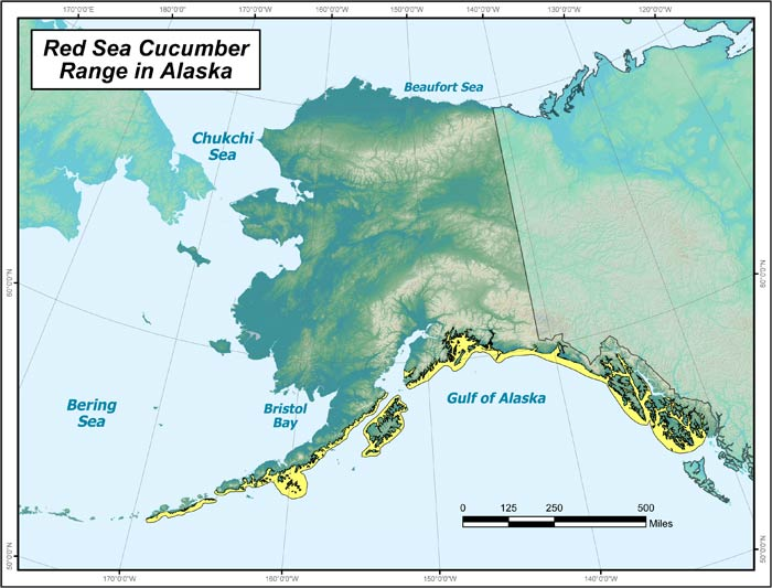 Range map of Red Sea Cucumber in Alaska