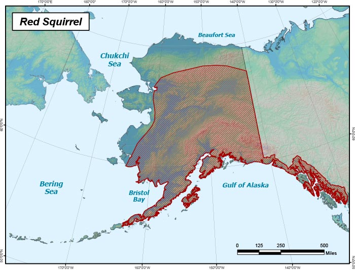 Range map of Red Squirrel in Alaska