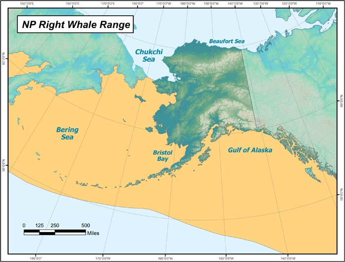 Range map of North Pacific Right Whale in Alaska