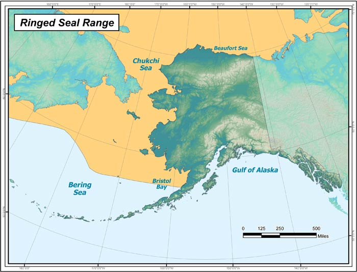 Range map of Ringed Seal in Alaska