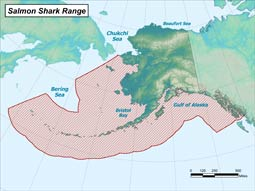 Salmon Shark range map