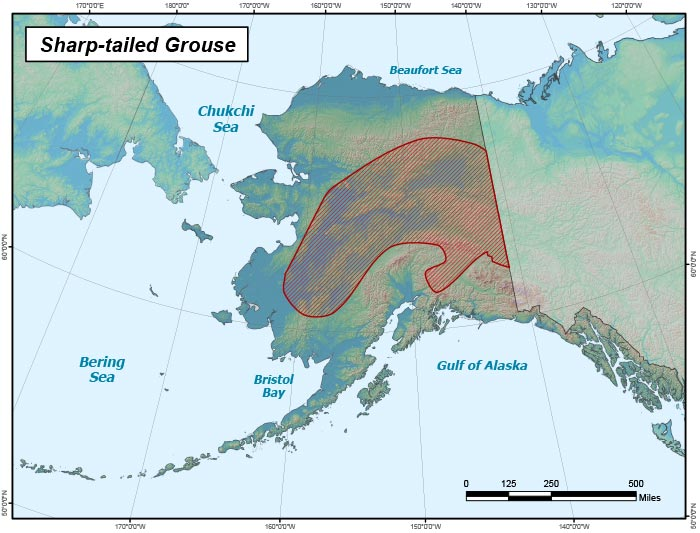 Range map of Sharp-tailed Grouse in Alaska