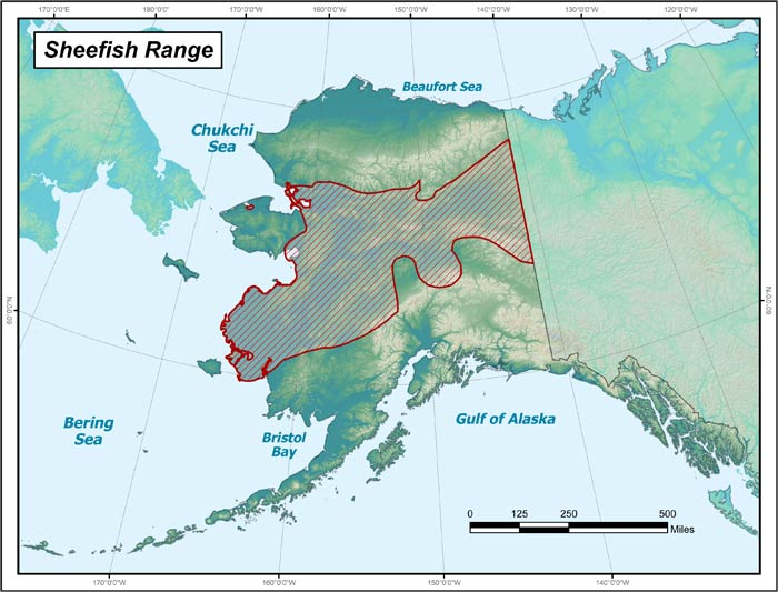 Range map of Sheefish in Alaska