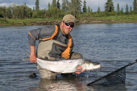 Sheefish photo gallery alaska department of fish and game for Fishing in fairbanks alaska