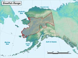 Sheefish range map