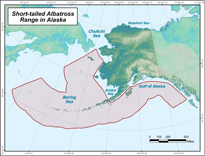 Range map of Short-tailed Albatross in Alaska