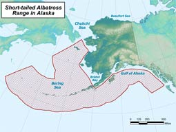 Short-tailed Albatross range map