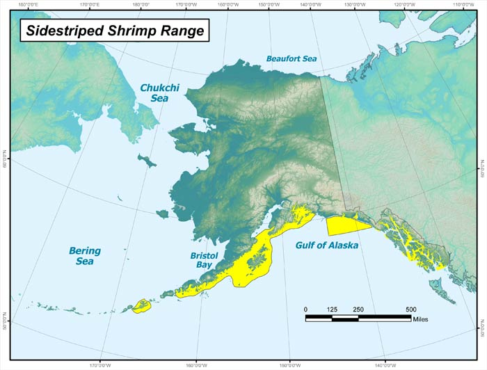 Range map of Sidestriped Shrimp in Alaska