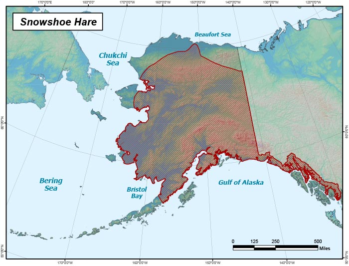 Range map of Snowshoe Hare in Alaska