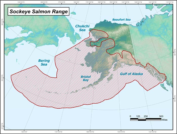 Range map of Sockeye Salmon in Alaska