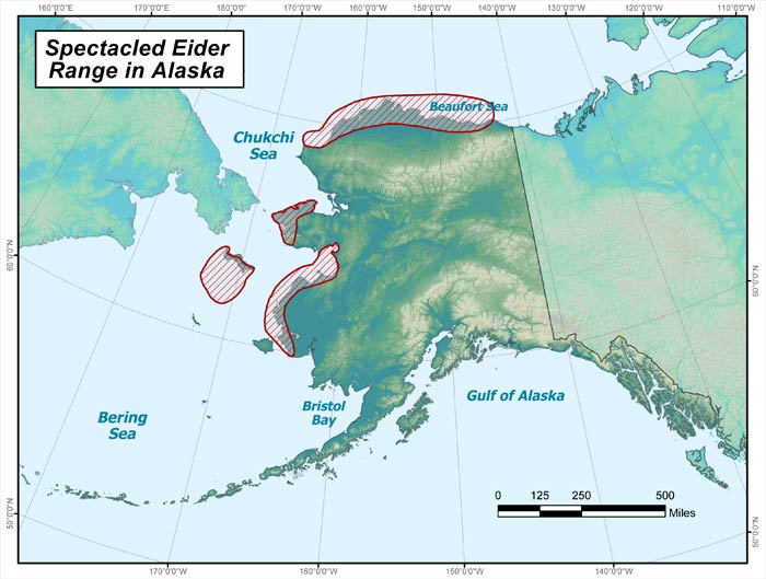 Range map of Spectacled Eider in Alaska