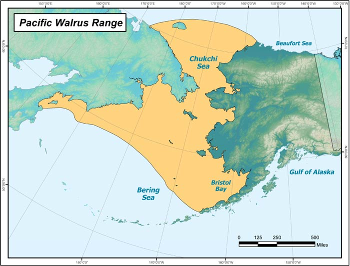 Range map of Pacific Walrus in Alaska