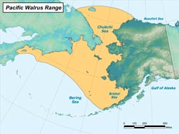 Pacific Walrus range map