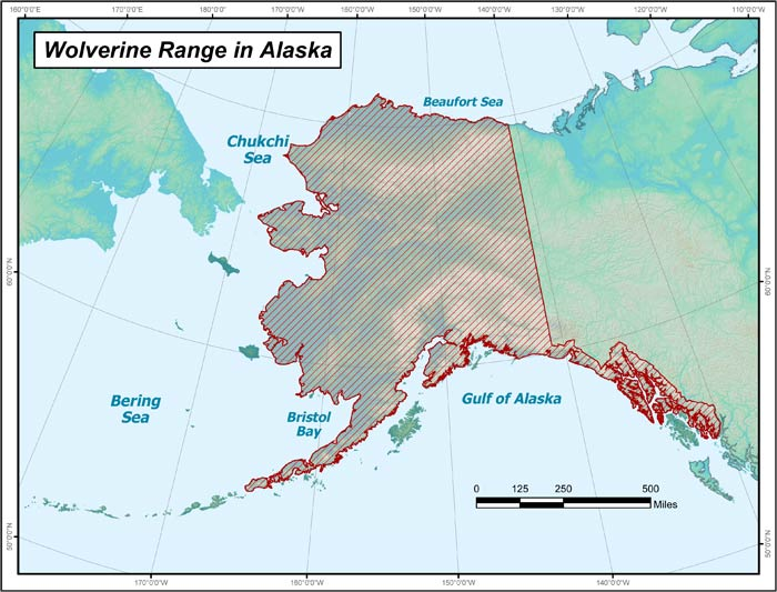Range map of Wolverine in Alaska