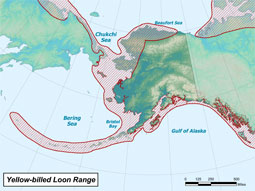 Yellow-billed Loon range map