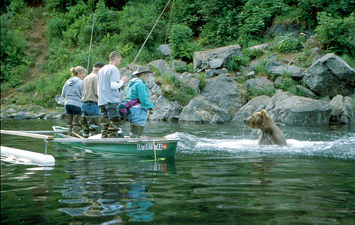 Bear Viewing In Alaska Alaska Department Of Fish And Game