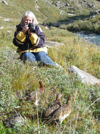 Woman photographing ptarmigan