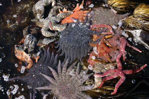Photo of a tidepool