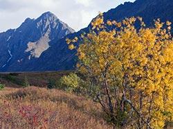 e701b5e639da Wildlife Viewing at Chugach State Park - Anchorage Area