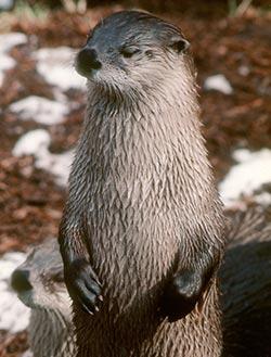 Wildlife Viewing at Kelly/Peterson Lakes - Kenai Peninsula, Alaskabalance of lake and peninsula borough