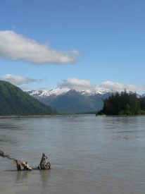 photo of Stikine River area wildlife
