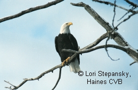 photo of Bald Eagle Preserve area wildlife