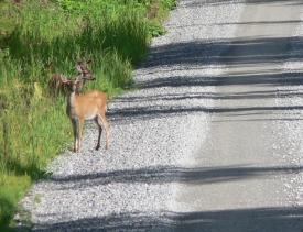 photo of Sandy Beach Road area wildlife