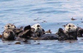 photo of Sitka Sound area wildlife