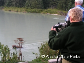 photo of Chilkoot River area wildlife