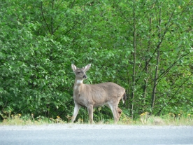 photo of Out the Road area wildlife