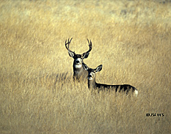 19 New Deer Antler Growth Chart
