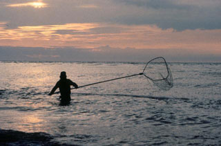 a man performs personal use dipnet fishing