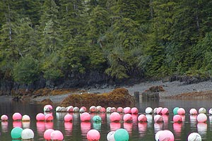 Aquatic Farming buoys near the shore
