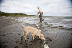 Fisherman and dog on the beach with a net