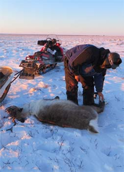 successful subsistence hunt for caribou