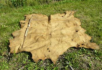 b568b0662c873 Tanning Alaska Big-Game Animal Skins at Home, Alaska Department of ...