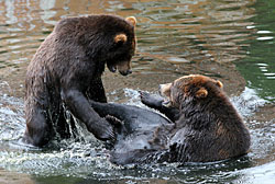 Living With Bears Alaska Department of Fish and Game