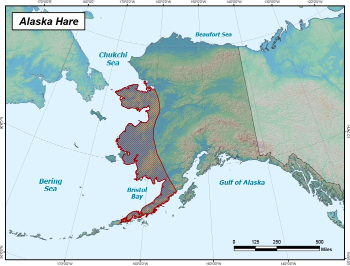 Range map of Alaska Hare in Alaska
