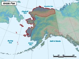 Arctic Fox range map