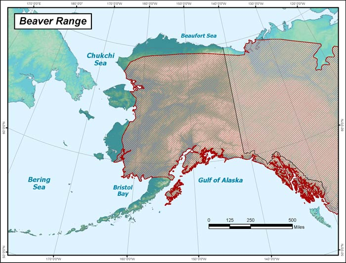 Range map of Beaver in Alaska