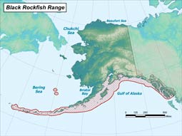 Black Rockfish range map