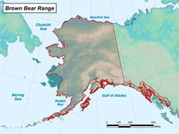 Brown Bear range map