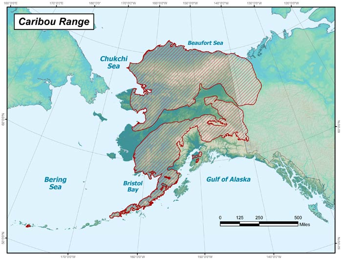 Range map of Caribou in Alaska