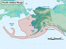 Pacific Halibut range map
