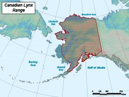 Lynx Species Profile, Alaska Department of Fish and Game on canada lynx diet, canada goose range map, canada lynx habitat, canada lynx classification, canada lynx home, canada lynx face, canada lynx life cycle, canada lynx den, lynx habitat map, canada lynx diagram, canada lynx predators, canada lynx behavior, canada lynx sightings in 2014, eurasian lynx range map, lynx territory map, canadian lynx map, canada lynx endangered, canada lynx size, canada lynx cat, canada lynx population numbers,