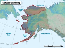 Northern Collared Lemming range map