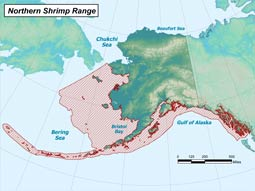 Northern Shrimp range map