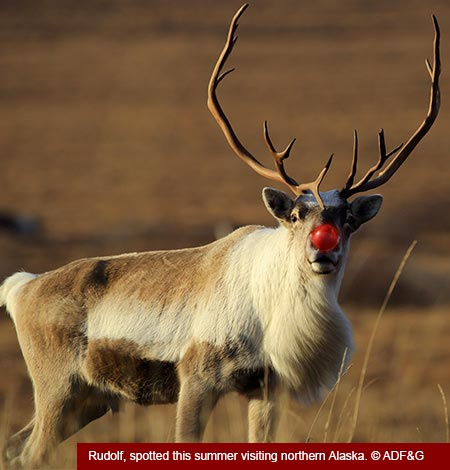 Photo of a Santa's Reindeer